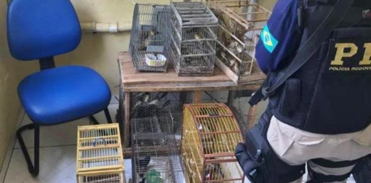 750_aves-prf-br324-prf-animais_2018223143512677