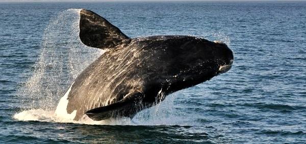 5346aa093c77a-animais-em-extincao-no-brasil-large